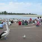 Memorial Park - Pelican feeding area